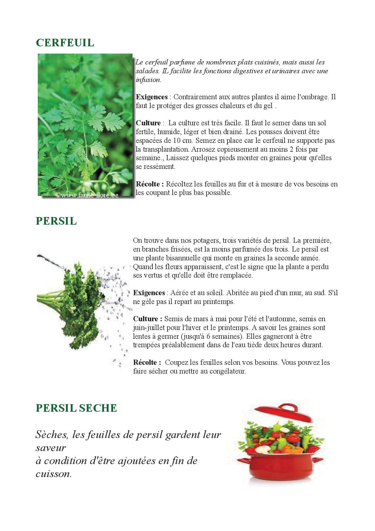 Quand planter herbes aromatiques plantation du basilic le basilic est une plante aromatique - Quand planter des fraisiers ...