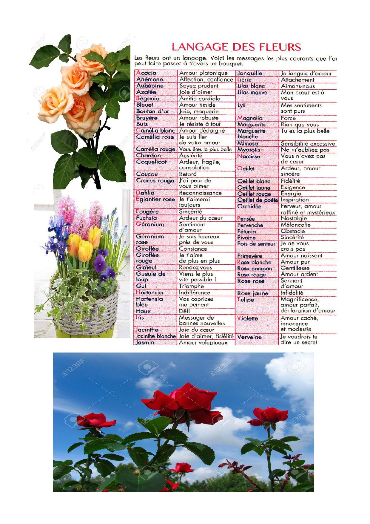 langage des fleurs | jardinement votre
